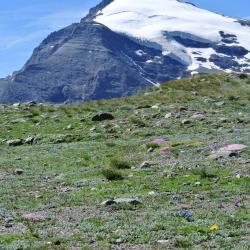 Le Charbonnel ( 3752m)