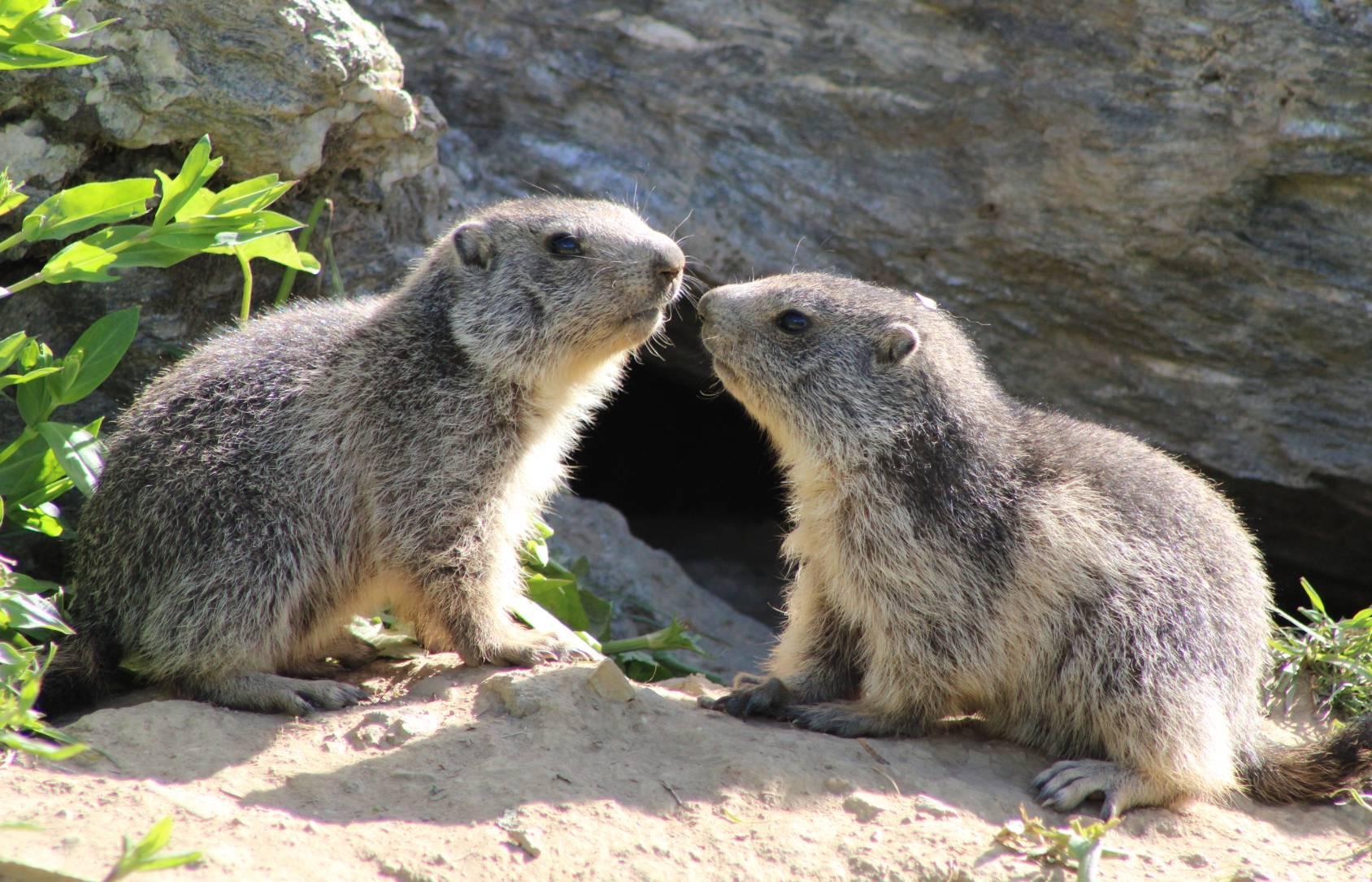 L univers des marmottes 14 9