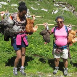 Portage des poules au refuge de la Leisse